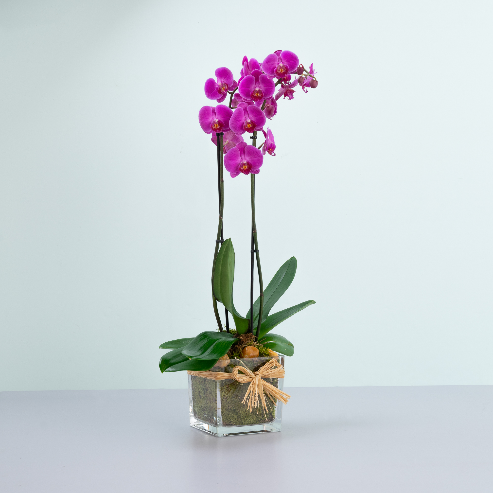 Single Purple Orchid