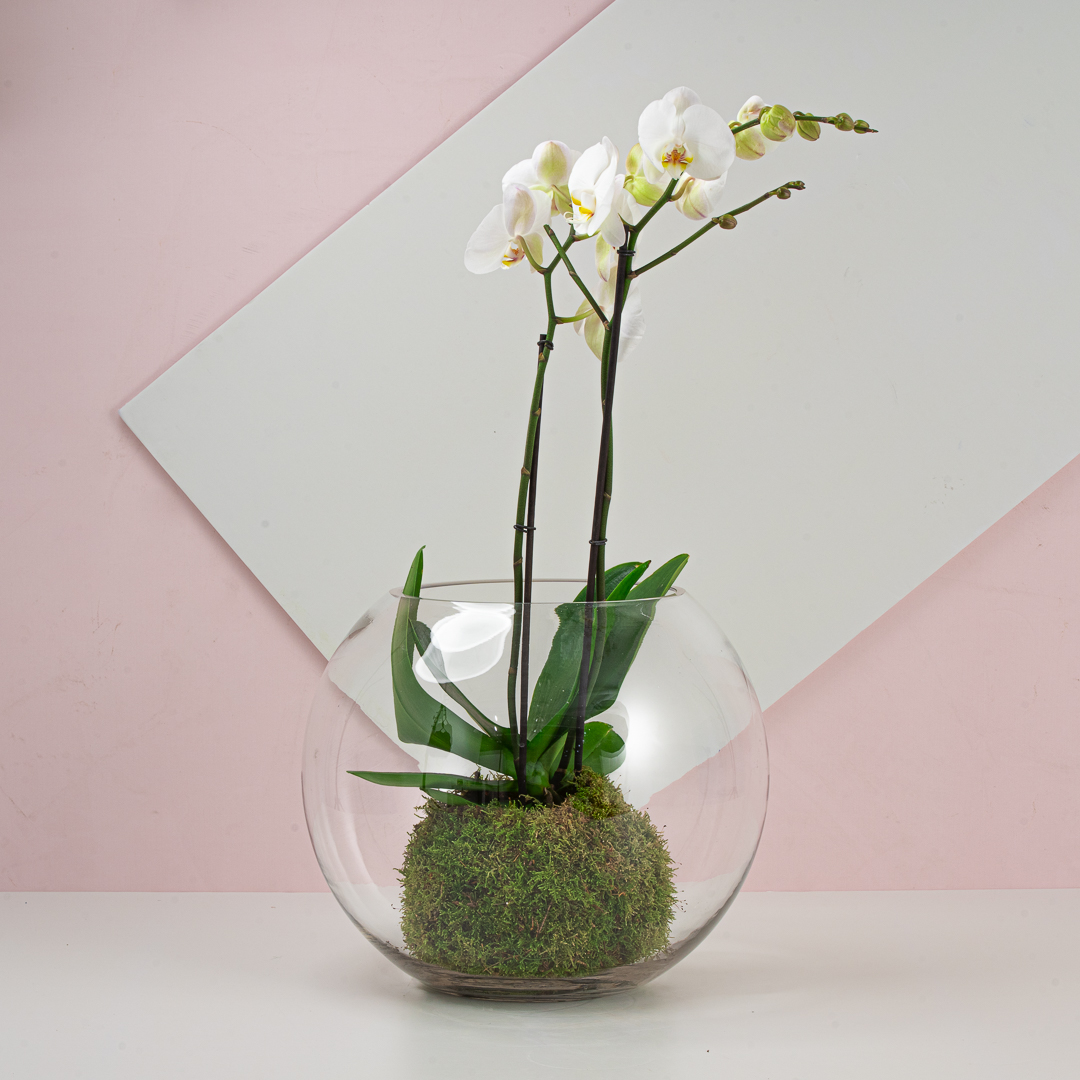Single Orchid