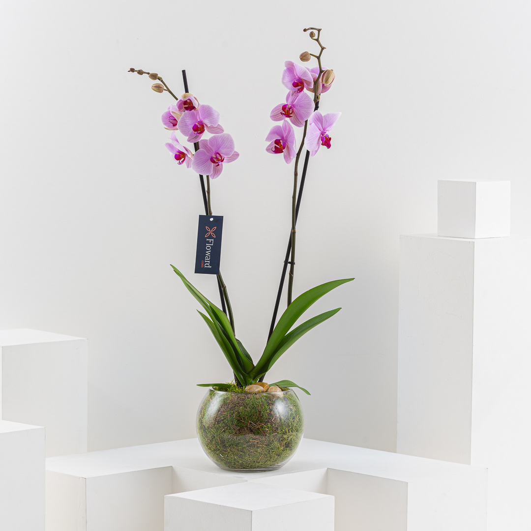 Single Pink Orchid