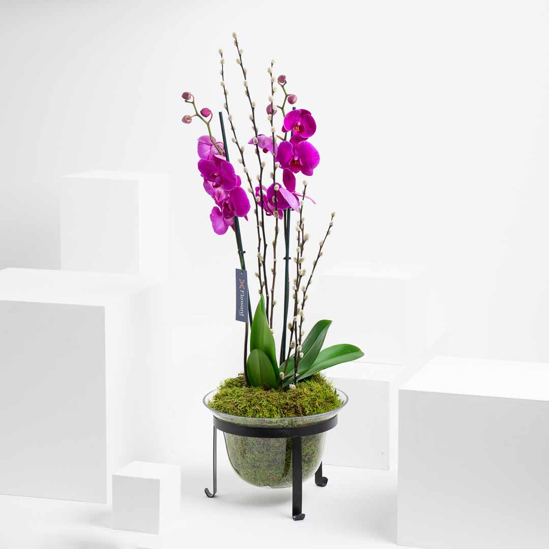 Farah's Orchid