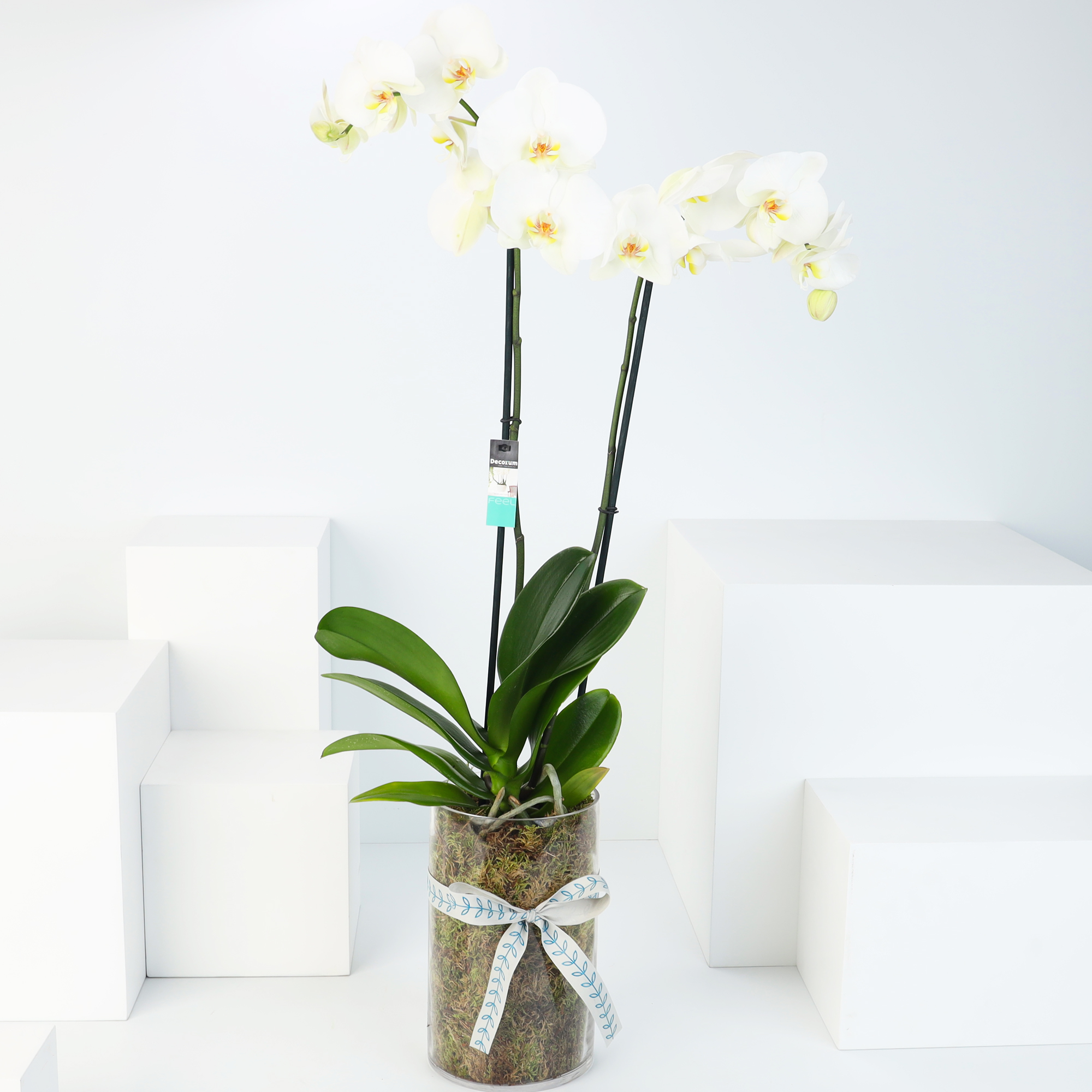 Hend's Pure Orchid
