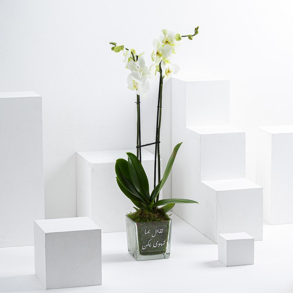 Seeta's Orchid
