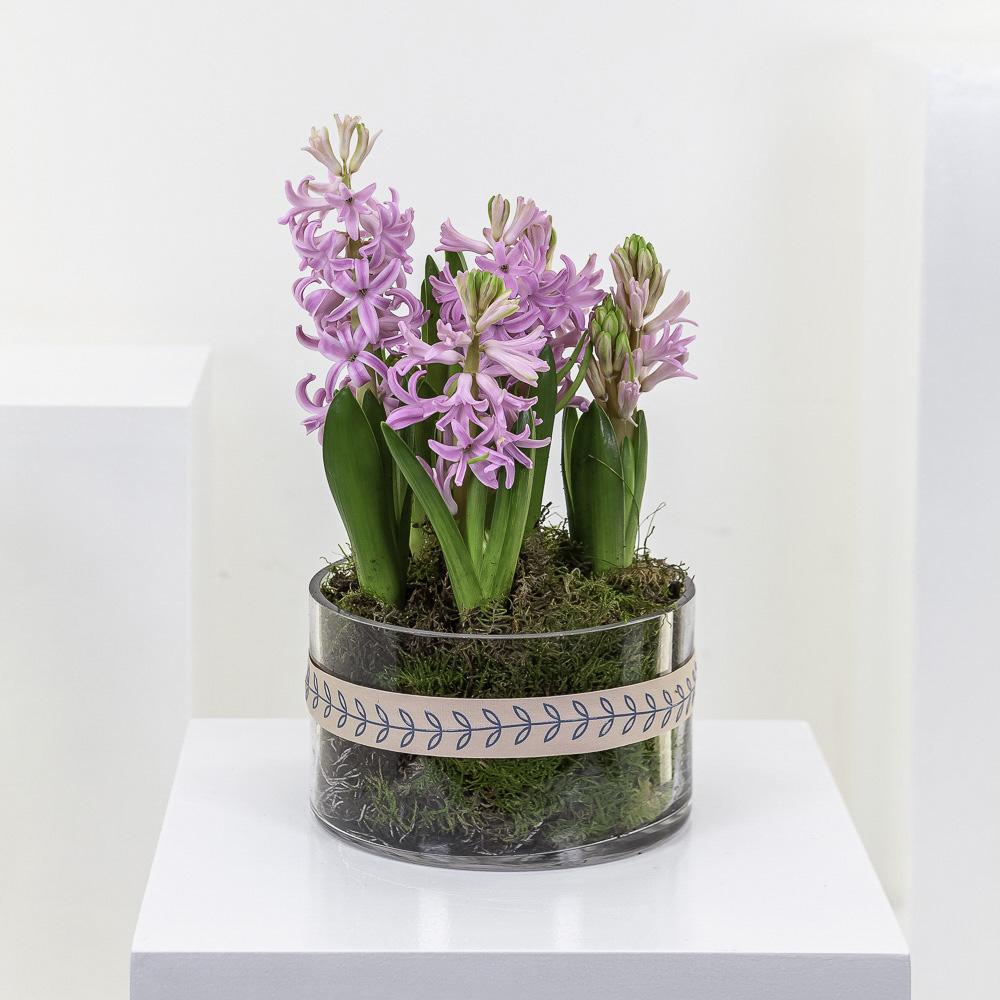 Pink Hyacinth Planter