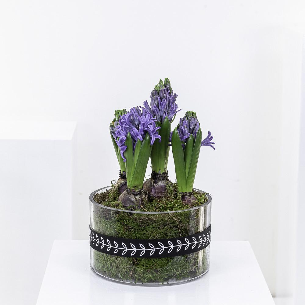 Blue Hyacinth Planter