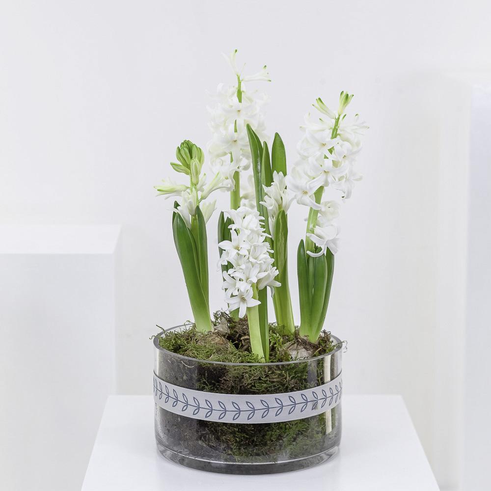White Hyacinth Planter
