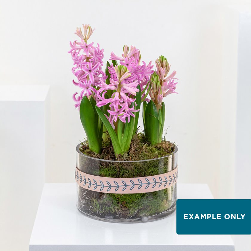 Weekly Plant Subscription
