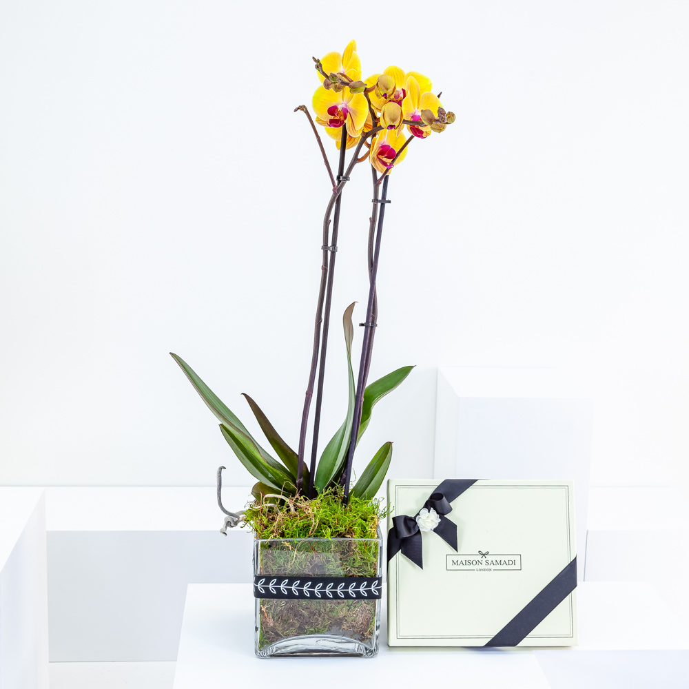 Gold Orchid with Milk Chocolates
