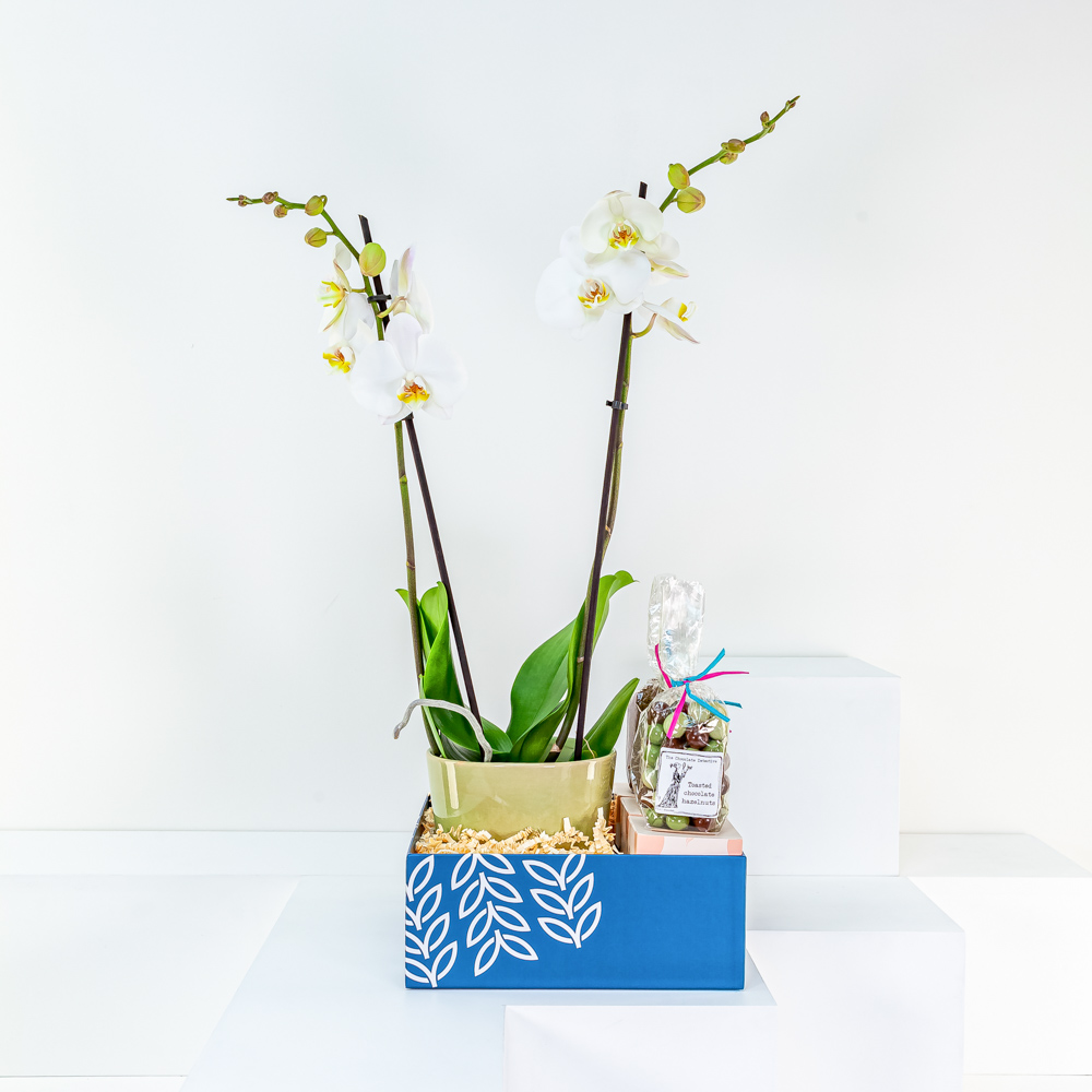 White Orchid in Ceramic Pot with Chocolate Selection