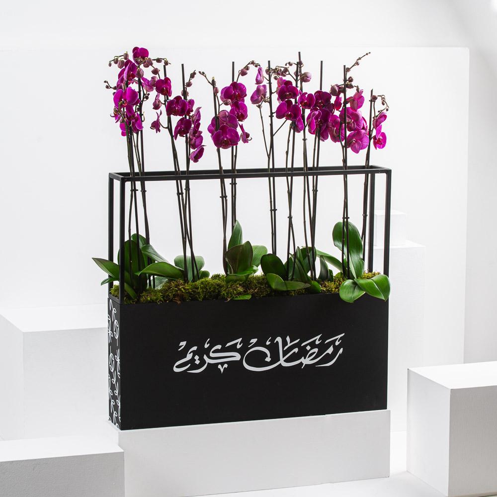 Ramadan Orchid I