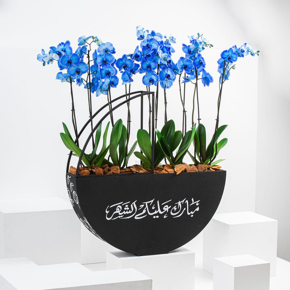 Ramadan Orchid II